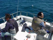 050911flatfish